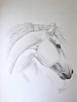 Cavallo Poster