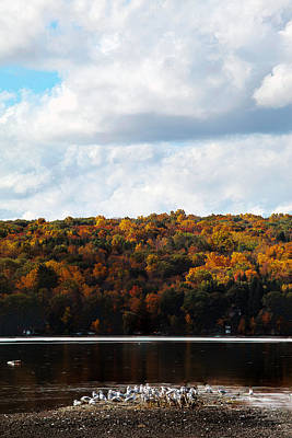 Poster featuring the photograph Cayuga Lake In Colorful Fall Ithaca New York  by Paul Ge