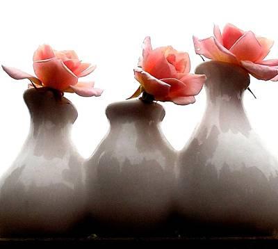 Cecil Brunner Roses  Poster by Karen Molenaar Terrell