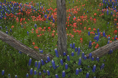 Cedar Fence In Llano Texas Poster