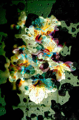 Celestial Flowers Poster by Loriental Photography