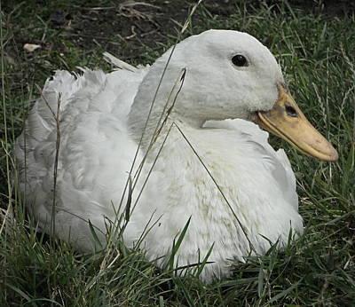 Celia Duck 2 Poster