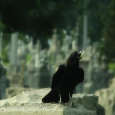 Cemetery Corvidae As It Caws Poster