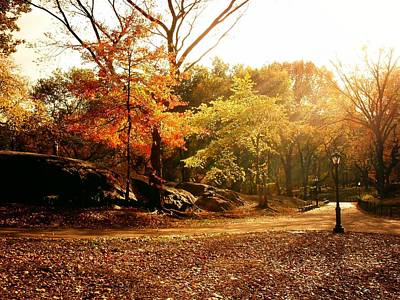 Central Park Autumn Trees In Sunlight Poster by Vivienne Gucwa