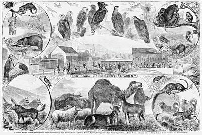 Central Park Zoo, 1866 Poster
