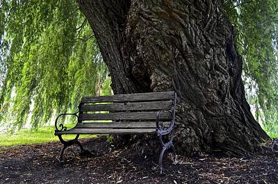 Century Tree Poster by Frozen in Time Fine Art Photography