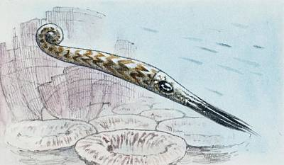Cephalopod Poster by Deagostini/uig
