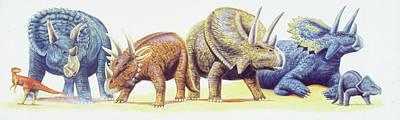 Ceratopsid Dinosaurs Poster
