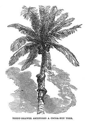 Ceylon Toddy-drawer Poster by Granger