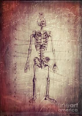 Chalkboard Skeleton Poster by Edward Fielding