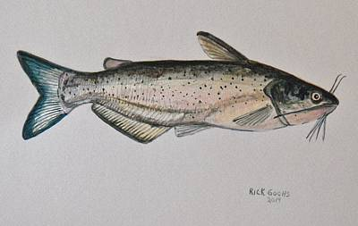 Channel Catfish Poster by Richard Goohs