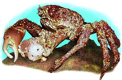 Channel Clinging Crab Poster