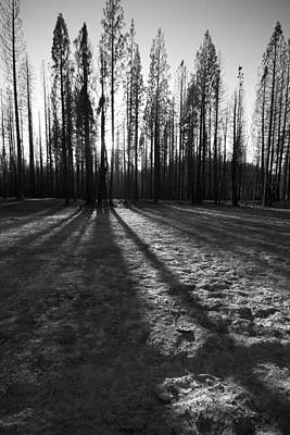 Charred Silence - Yosemite Rm Fire 2013 Poster