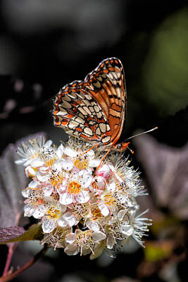 Checkerspot Poster