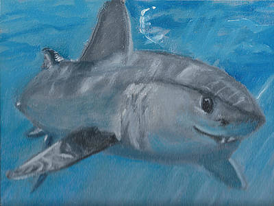 Cheeky Shark Poster by Jessmyne Stephenson
