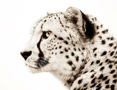 Cheetah Poster by Jacky Gerritsen