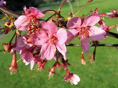 Cherry Blossom 2 Poster