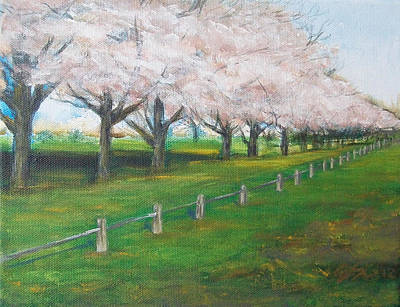 Poster featuring the painting Cherry Blossom Christchurch by Jane  See