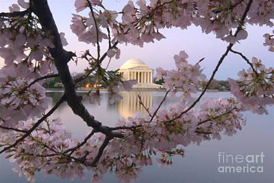 Cherry Blossom Festival   Dc Poster