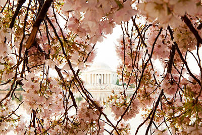Cherry Blossom Flowers In Washington Dc Poster by Susan Schmitz