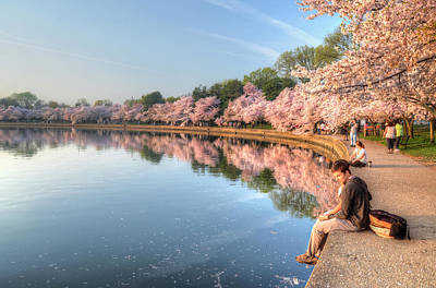 Poster featuring the photograph Cherry Blossom Love by Michael Donahue