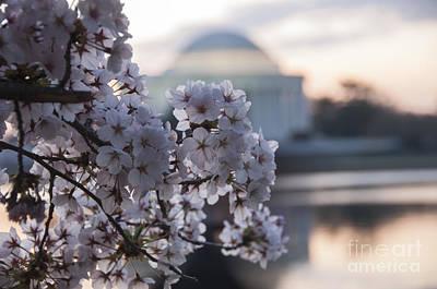 Cherry Blossom Memories Poster