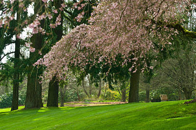 Poster featuring the photograph Cherry Blossom by Sabine Edrissi