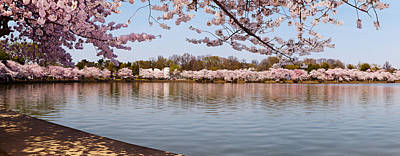 Cherry Blossom Trees Near Martin Luther Poster by Panoramic Images