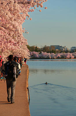 Cherry Blossoms 2013 - 008 Poster by Metro DC Photography