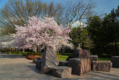 Cherry Blossoms 2013 - 058 Poster by Metro DC Photography