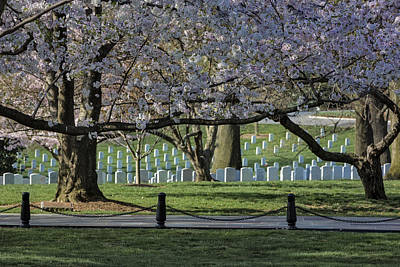 Cherry Blossoms Adorn Arlington National Cemetery Poster by Susan Candelario
