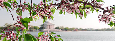 Poster featuring the photograph Cherry Blossoms And The Jefferson Memorial Panorama by Mitchell R Grosky