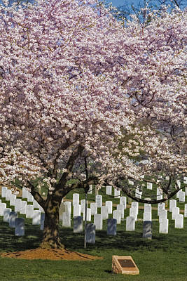 Cherry Blossoms Grace Arlington National Cemetery Poster by Susan Candelario