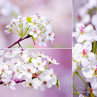Cherry Blossoms In The Spring Poster