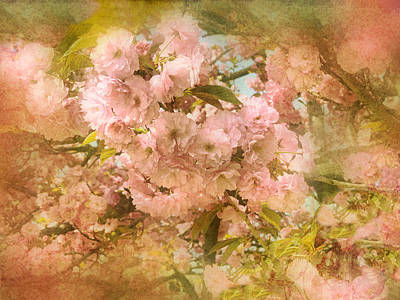 Cherry Blossoms Poster by Jessica Jenney