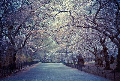 Cherry Blossoms - Spring - Central Park Poster by Vivienne Gucwa