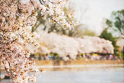 Poster featuring the photograph Cherry Blossoms In Washington Dc by Vizual Studio
