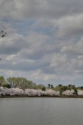 Cherry Blossoms - Washington Dc - 011365 Poster by DC Photographer