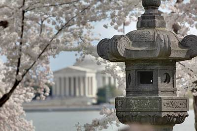 Cherry Blossoms With Jefferson Memorial - Washington Dc - 011323 Poster