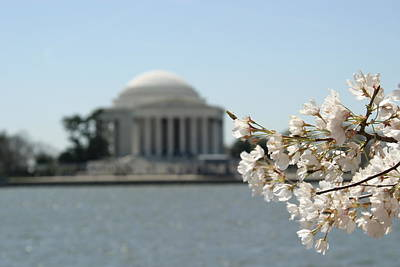 Cherry Blossoms With Jefferson Memorial - Washington Dc - 01136 Poster by DC Photographer