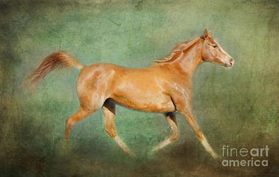 Chestnut Arabian Horse Trotting Poster by Michelle Wrighton