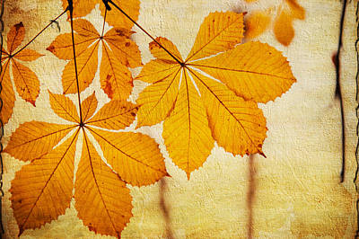 Chestnut Leaves At Autumn Poster by Jenny Rainbow