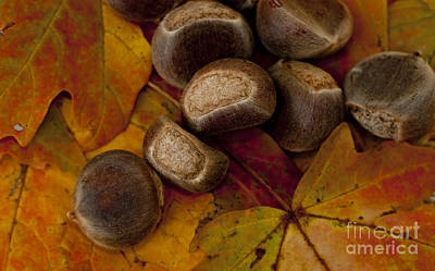 Chestnuts And Fall Leaves Poster by Wilma  Birdwell