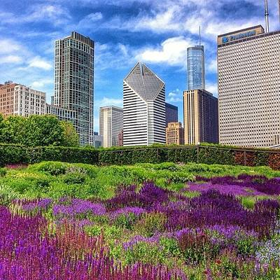 Chicago Skyline At Lurie Garden Poster
