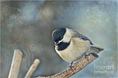 Chickadee With Texture Poster