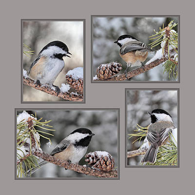 Chickadees In Winter Poster