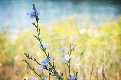 Poster featuring the photograph Chicory By The Beach by Peggy Collins