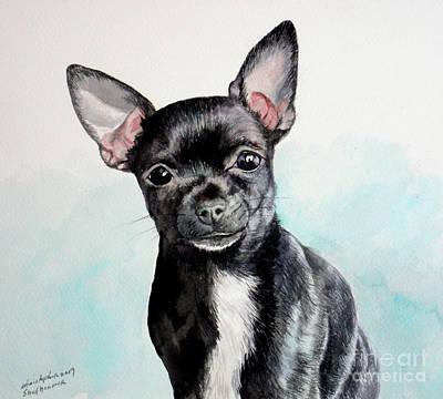 Chihuahua Black Poster