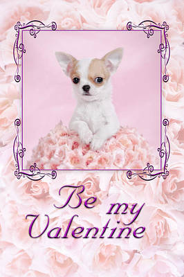 Chihuahua Valentine Poster