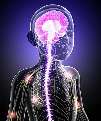 Child's Central Nervous System Poster by Pixologicstudio